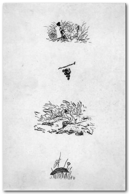 manet-faune